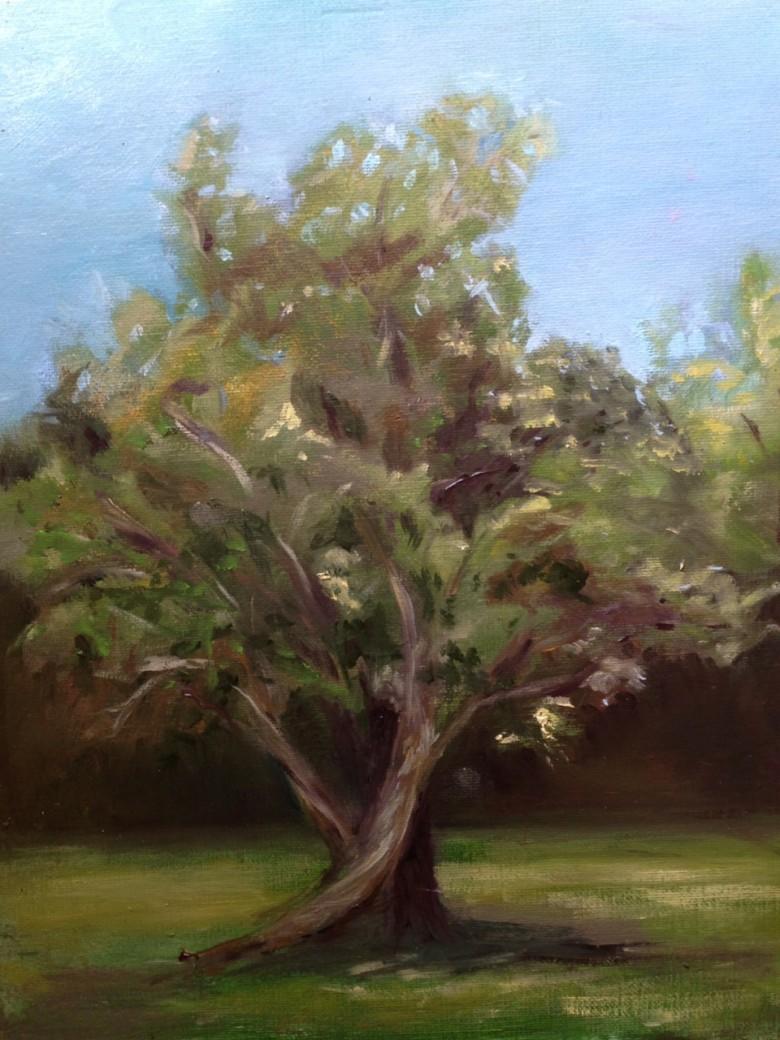 Backyard Tree